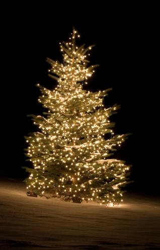 http://missiokids.nl/Christendom/images/Kerstboom_buitenverlichting.jpg